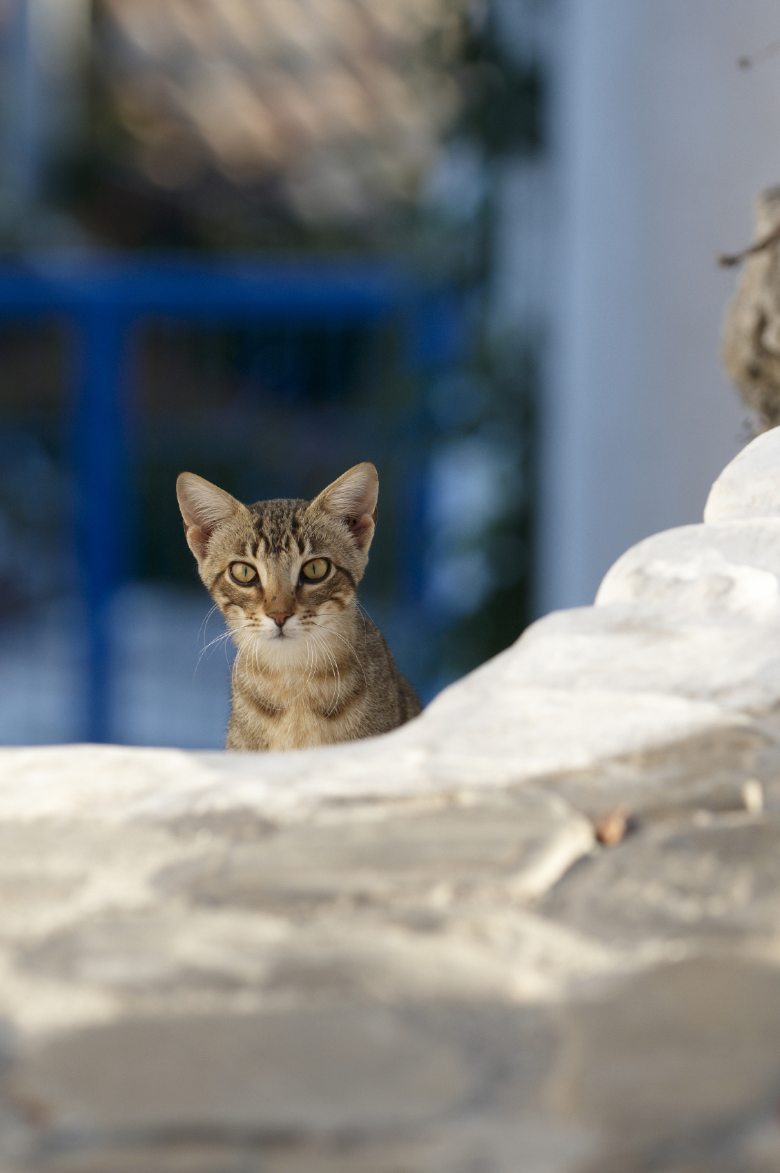 Greklands S 246 Ta Katter I Grekland